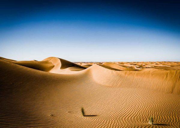 L'or du désert